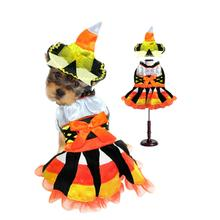 Witch Dog Halloween Costume - Candy Corn