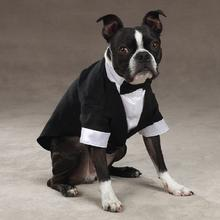 Yappily Ever After Wedding Groom Dog Tuxedo by East Side Collection