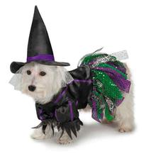 Zack and Zoey Scary Witch Dog Costume