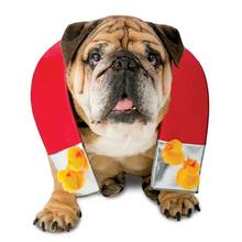 Chick Magnet Halloween Dog Costume