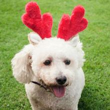 ZippyPaws Holiday Dog Antlers
